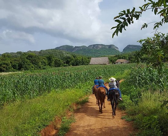 Knowing Vinales Tour : Horseback riding through the valley!