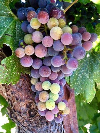 Martorana Family Winery