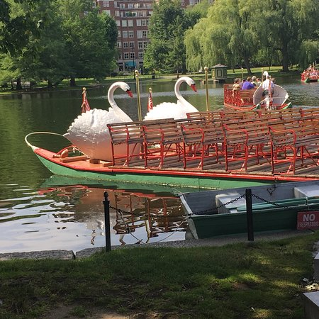 Swan Boats (Boston) - 2019 All You Need to Know BEFORE You