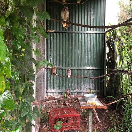 San Isidro, Costa Rica: photo4.jpg