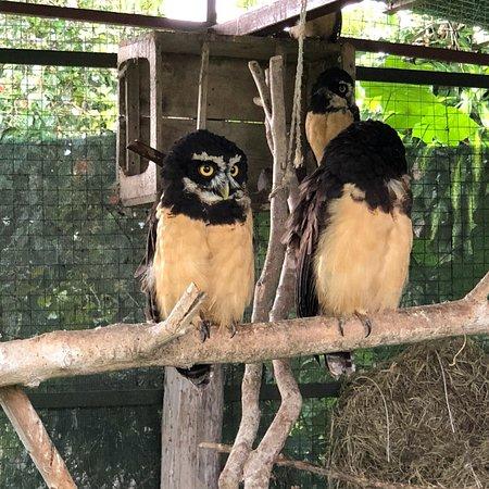 San Isidro, Costa Rica: photo5.jpg