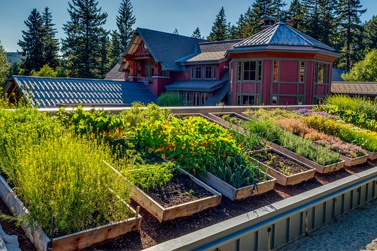 The Rooftop Garden Provides Many Vegetables And Herbs Which Are