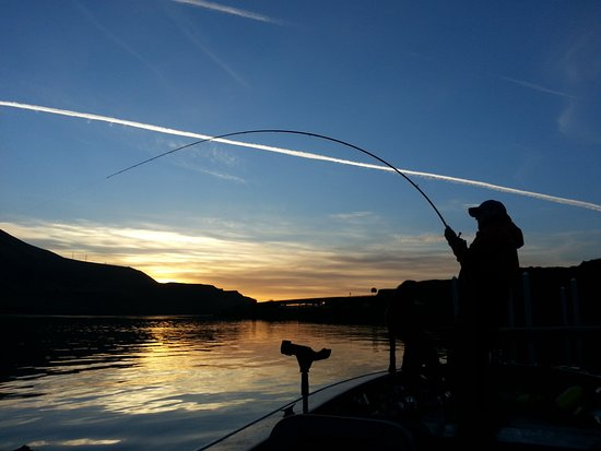 Chehalis, WA: Capt. Ron Holt going toe to toe with a trophy White Sturgeon at the crack of dawn.
