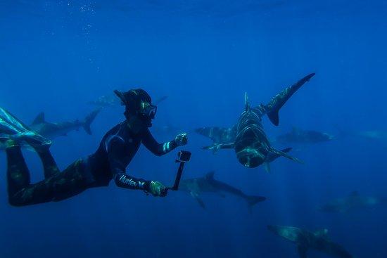 Baja Shark Experience