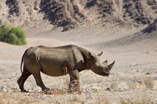 6-daagse Namibische woestijn en ...