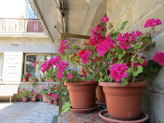 Montemignaio, Olaszország: Gerani all'ingresso