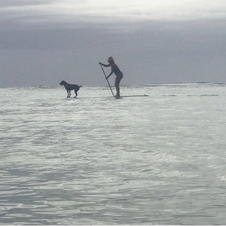 Hawaii Surf Dogs