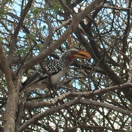 Central Kalahari Game Reserve, Botsuana: photo7.jpg