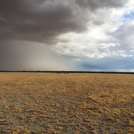 Central Kalahari Game Reserve, Botsuana: photo8.jpg