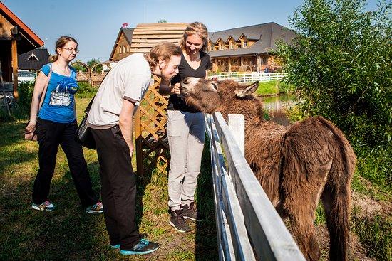 Wisznice, Polska: ослик. Есть еще лама, верблюд и страусы