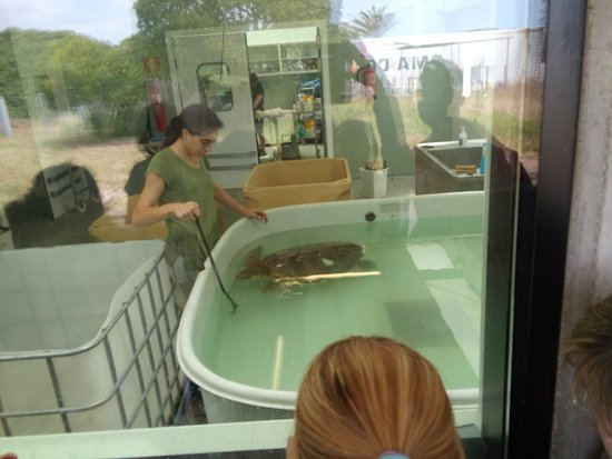 CRAM Fundacion Para La Conservacion y Recuperacion de Animales Marinos: Rescate