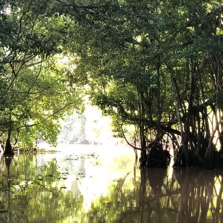 Abai Jungle Lodge: photo7.jpg