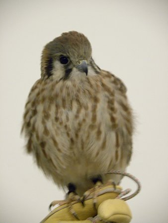 World Center For Birds of Prey: One of the residents!