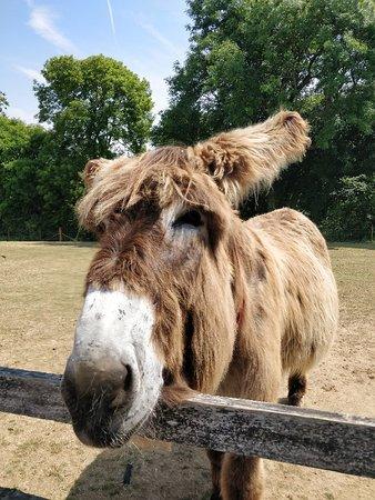 The Donkey Sanctuary: IMG_20180719_122442_large.jpg