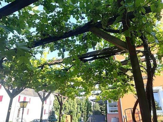 Haslach im Kinzigtal, Deutschland: IMG_20180718_184855_large.jpg