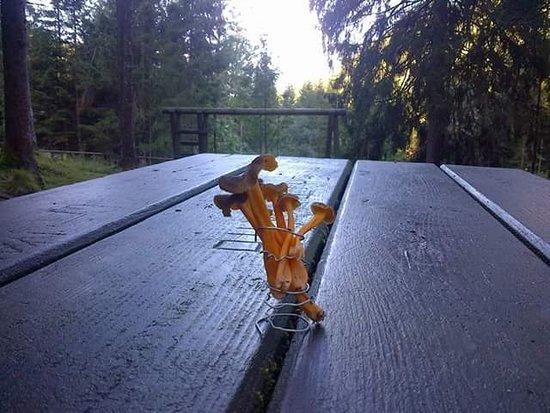 Lozzo di Cadore, Italia: Anche per gli amanti di funghi