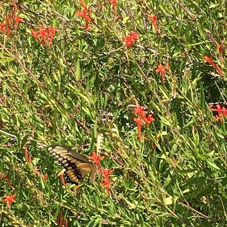Eden, TX: photo4.jpg