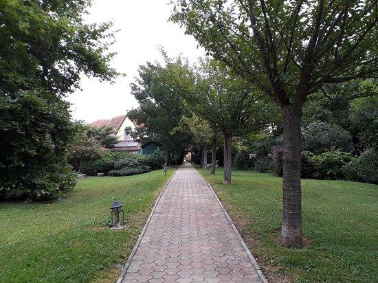 Cserszegtomaj, Hungria: 20180719_075450_large.jpg