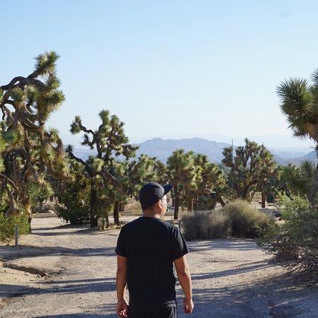 Black Rock Campground: Near Campsite #45