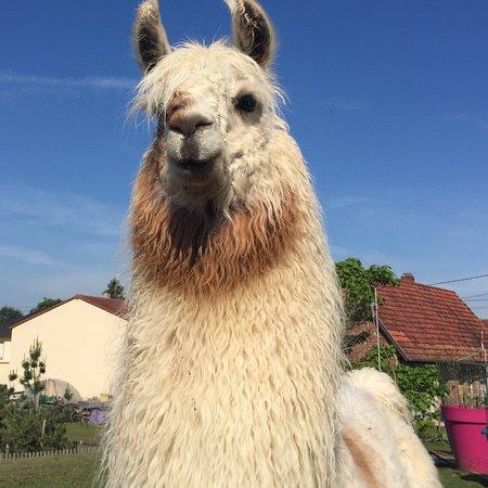 Clos des Lamas - Lama's Touch