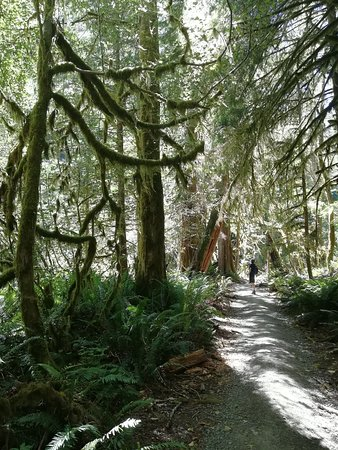 Olympic Hiking Co.: The forest between the lake and the falls (in some parts reminds hoh rain forest)