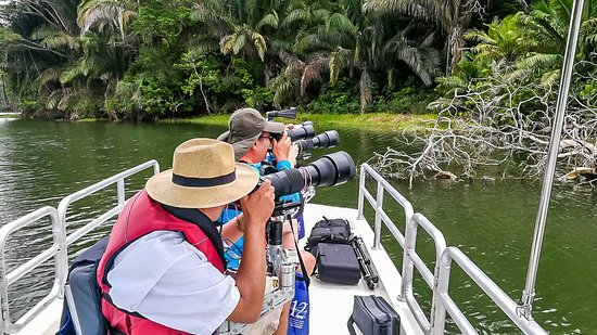Gamboa, Panama : Sigma 150-600mm lenses are ideal for photographing the jungle wildlife