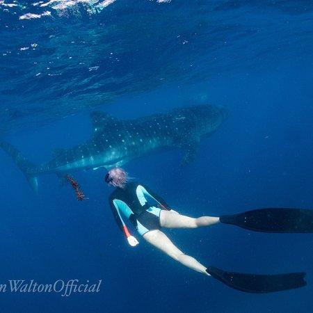 Shark Diving With Ryan Walton Port