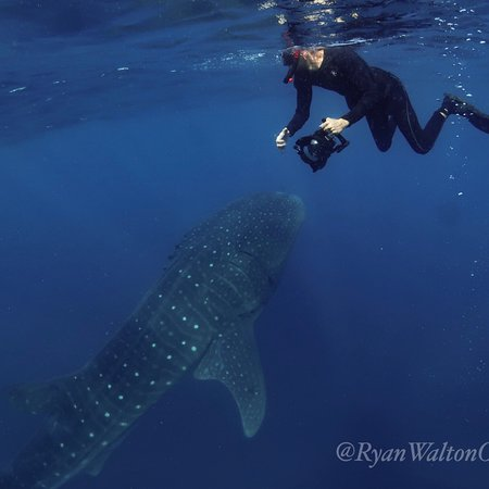 Shark Diving With Ryan Walton Port Orange 2020 All You Need To Know Before You Go With Photos Tripadvisor
