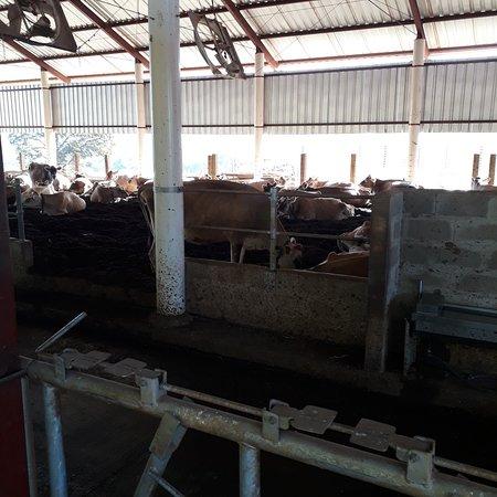 Cassia dos Coqueiros, SP: Fazenda Terra Limpida