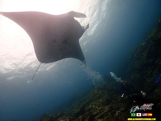 Manta Diving in Ishigaki Island - Aloha Divers Okinawa