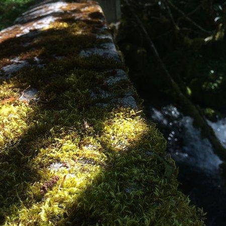 Little Zigzag Falls 이미지
