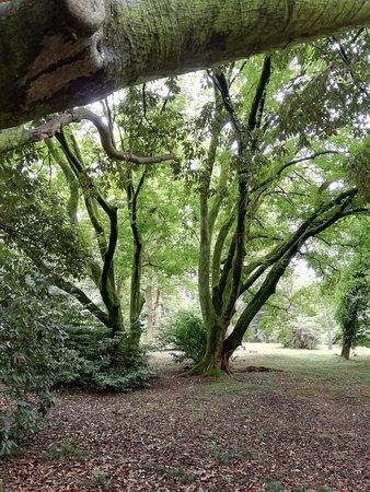 Парк Южные культуры: Вот такие деревья