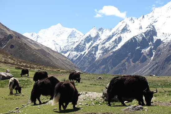 Langtang National Park, Nepal: Langtang Valley, Nepal
