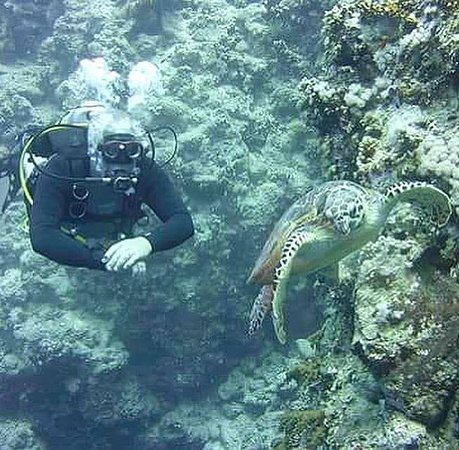 Ocean College Dive Centre: One of many excellent pictures!