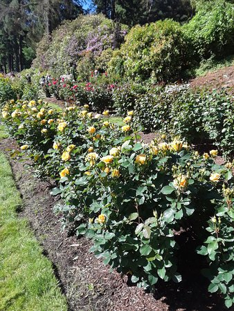 International Rose Test Garden (Portland) - 2018 All You Need to ...