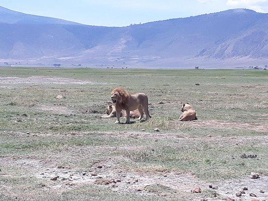 Safari Kenya Con Samuel