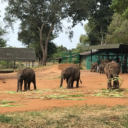 Udawalawa, Sri Lanka: photo4.jpg
