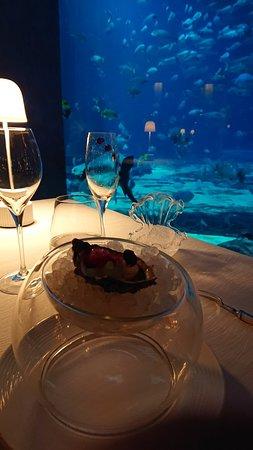 Un dîner en compagnie des poissons !