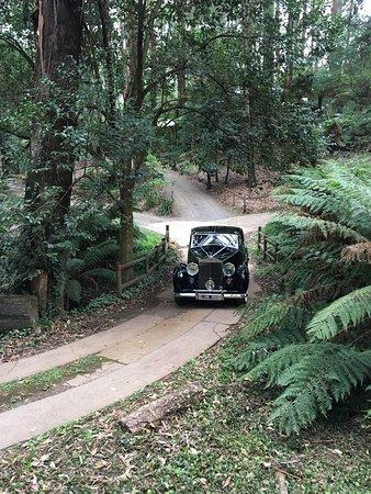 Mount Dandenong, Australia: Wedding car