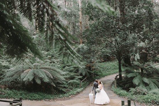 Mount Dandenong, Australia: Wedding photo
