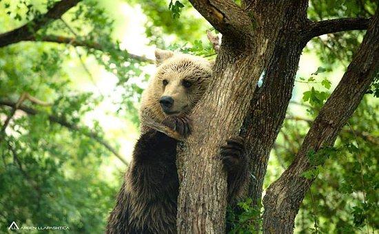 Bear Sanctuary Prishtina & Thesaret e Natyres