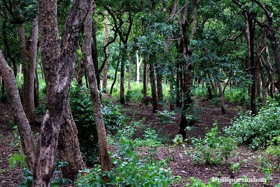 Jeep - Picture of Marayoor Sandalwood Forest, Marayur - TripAdvisor