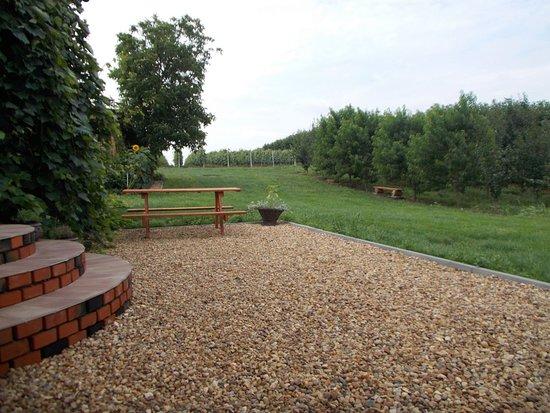 Cmielow, Poland: Widok na winnicę i drzewka owocowe