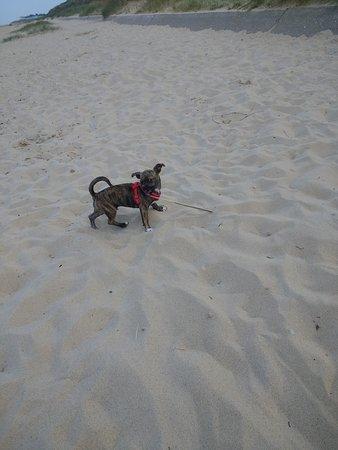Caister-on-Sea Beach : Lovely beach caister on sea my puppy Teddys first holiday