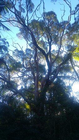 Sutherland Shire, Australia: Beautiful tree.