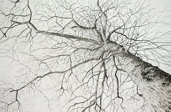 Lakewood, NY: Graphite on Paper, Leslie Calimeri