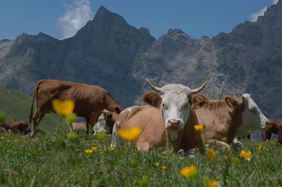 Canton of Vaud, Switzerland: Pas-de-Cheville, Anzeindaz