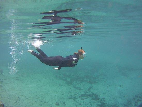 Bird's Underwater: 3 Sisters Springs