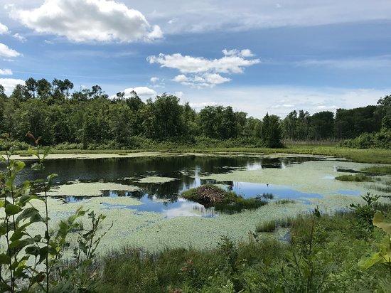 McGregor, MN: Beaver Pond