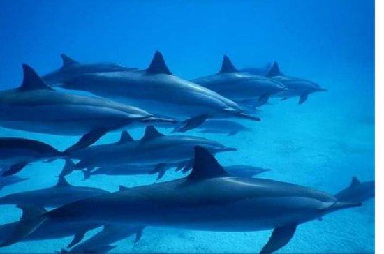 Snorkeling Trip At Satayh Reef